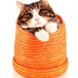 Cat in wicker basket isolated on white — Stock Photo #25449797