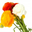 Ranunculus (persian buttercups), isolated on white — Stock Photo #25451785
