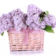 Beautiful lilac flowers isolated on white - 图库照片