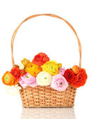 Ranunculus (persian buttercups) in basket, isolated on white — Stockfoto