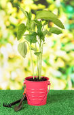 Young plant in bucket on grass on bright background — Stock Photo