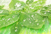 Green leaves on bright background, close-up — Stock Photo