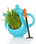 Zielona trawa w ozdobny puli na białym tle — Zdjęcie stockowe