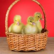 Little ducklings in wicker basket on table on red background - Stock Photo
