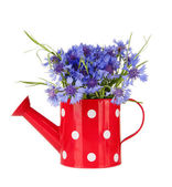 水まき缶、白で隔離されるヤグルマギクの花束 — ストック写真