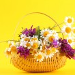 Beautiful wild flowers in basket, on yellow background — Stock Photo