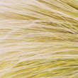 Stock Photo: Feather Grass or Needle Grass, Nasselltenuissima, close up