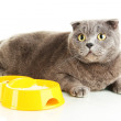 Cat with food isolated on white - Stok fotoğraf