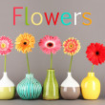 Beautiful Gerber flowers on grey background — Stock Photo