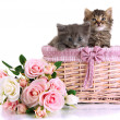 Small kittens in basket isolated on white — Stock Photo