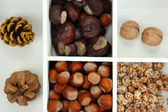 Assortment of nuts,chestnut, pinecone and acorn in white wooden box — Stock Photo