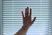 Hand on white blinds background — Stock Photo