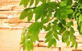 Zelené listy na kamenné pozadí — Stockfoto