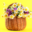 Beautiful wild flowers in basket, on yellow background — Stock Photo #25714055