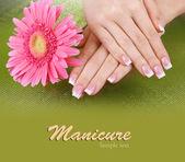 Vrouw handen met frans manicure en bloem op groene achtergrond — Stockfoto