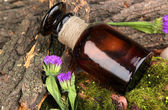Bottle with basics oil on tree bark and stones close up — Stock Photo