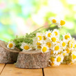 Many chamomile on wooden table on nature background — Stock Photo