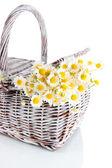 Many chamomile on basket isolated on white — Stock Photo