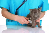 Veterinarian examining kittens isolated on white — Stock Photo