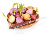 Kiełkującej cebuli drewniany kosz na białym tle — Zdjęcie stockowe