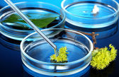 Chemical research in Petri dishes on dark blue background — Stock Photo