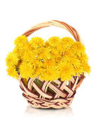 Dandelion flowers in wicker basket isolated on white — Stockfoto