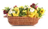 красивые весенние цветы в корзине, изолированные на белом фоне — Стоковое фото