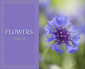 Schöne kornblume im freien — Stockfoto