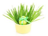 çimenlerin üzerinde tablo üzerinde beyaz izole kase paskalya yortusu yumurta — Stok fotoğraf