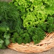 Useful herbs close up — Stock Photo