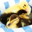 Cute ducklings on color fabric, close-up — Stock fotografie