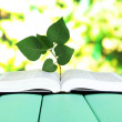 Book with plant on table on bright background — Stock Photo #26152889