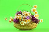 Schöne wildblumen in korb, auf grünem hintergrund — Stockfoto