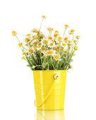 Many chamomile in bucket isolated on white — Stock Photo
