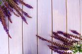 Fleurs de sauge sur fond en bois violet — Photo
