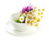 Beautiful wild flowers in — Stock Photo