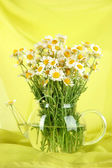 Many chamomile in glass teapot on green cloth background — Stock Photo