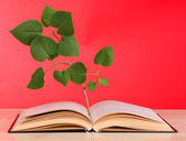Book with plant on table on red background — Stock Photo