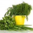 Stock Photo: Useful herbs in pail isolated on white