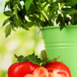 Fresh tomatoes and young plant in bucket on wooden table on natural background — Zdjęcie stockowe