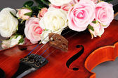 Classical violin with flower close up — Stock Photo