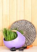 Erba verde in vaso decorativo su fondo in legno — Foto Stock