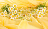 Many chamomile on yellow cloth background — Stock Photo