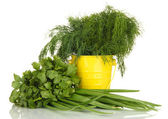Useful herbs in pail isolated on white — Stock Photo