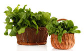 Fresh herbs in baskets isolated on white — Stock Photo