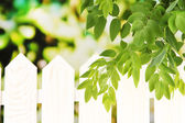 Green leaf near fence on bright background — Stock Photo