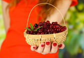 Woman hand holding basket of ripe red cranberries, close u — Stock Photo