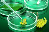 Chemical research in Petri dishes on dark green background — Stock Photo