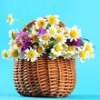 Beautiful wild flowers in basket, on blue background — Stock Photo