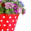 Stock Photo: Beautiful bouquet in pail isolated on white